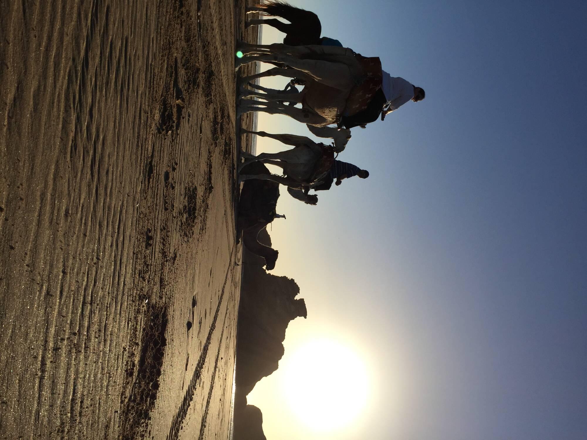 Camel Ride 1h