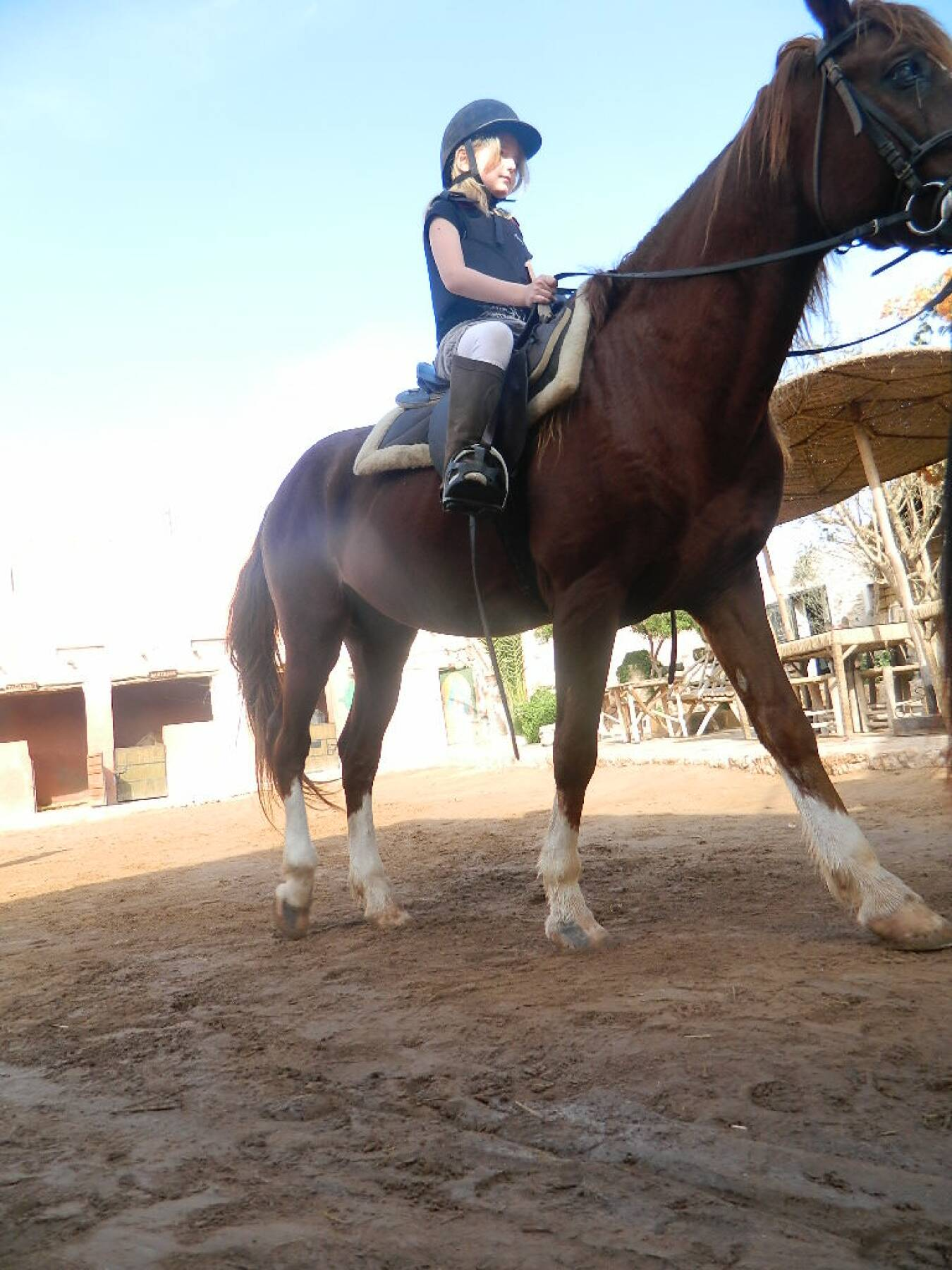 10 Horse Riding Lessons
