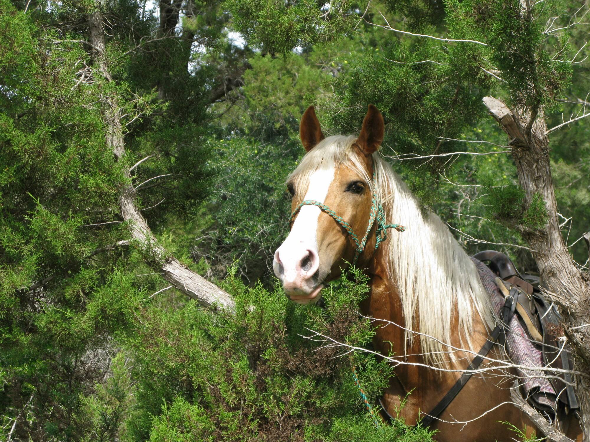 Balade à cheval avec déjeuner