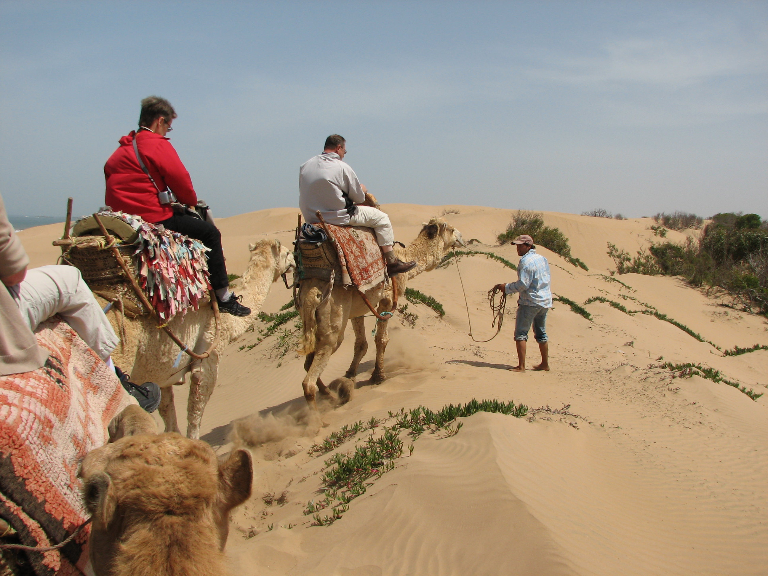 One-day camel ride with lunch